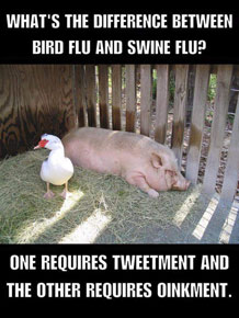 swine-vs-bird-flu